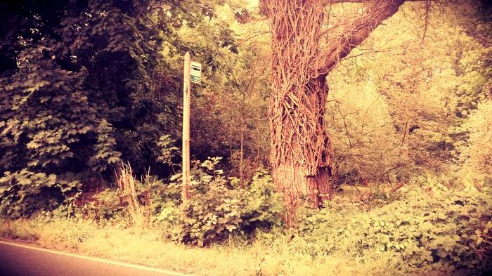 Bus stop in Epsom!